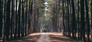 Mindful coaching - attitudine alla presenza